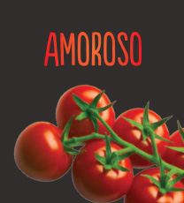 Amoroso Cocktail Truss Tomato