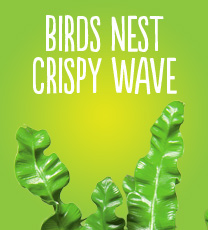 Birds Nest Crispy Wave