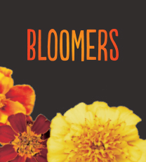 Bloomers 10 pack (seasonal flowering varieties)
