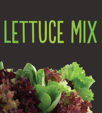 Lettuce Mix 10 pack