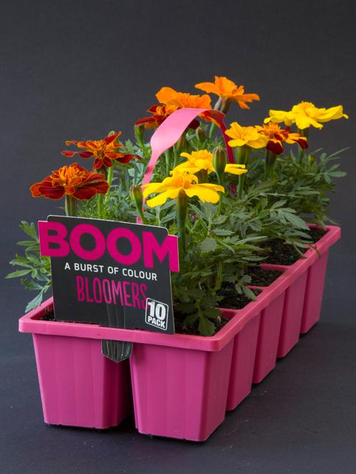 Bloomers.jpg