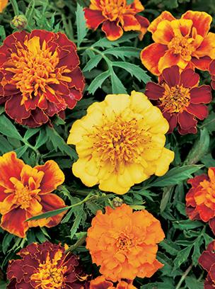 bloomers_01.jpg