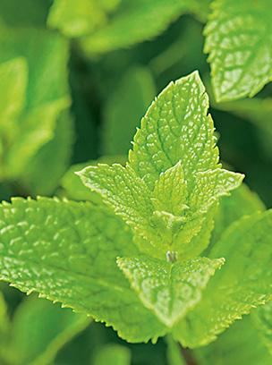 herb_03.jpg